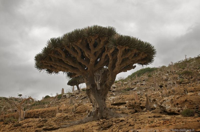 socotra (yemen)  2